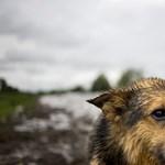 Online konzultációt indított a kormány az állatvédelemről