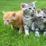 Börtön a macskák gyilkosának
