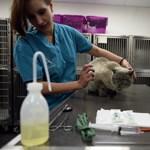 ATE: Egyre nagyobb szükség van állatorvosokra