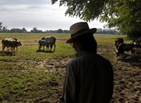 A magyar termelők kevesebb mint egy százaléka biogazda