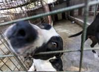 Magyar agykutatók rájöttek, mi zajlik a kutyák agyában, miközben beszélünk hozzájuk
