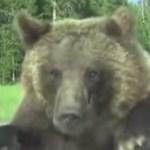 Videó: Döntse el ön, hogy cuki, vagy rém ijesztő ez a hatalmas mackó