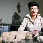 Halott állatokra alapozta kisvállalkozását az egykori topmenedzser nő
