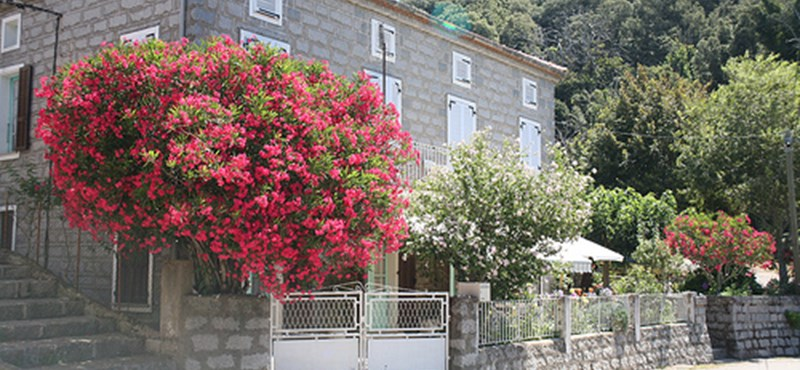 Mediterrán hangulat - így virágzik egész évben a leander Önnél is