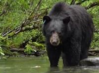 A látogatók előtt támadtak rá medvék egy állatkerti dolgozóra Sanghajban