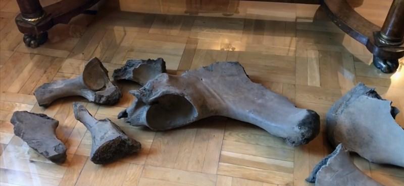 Ősi elefánt csontjait találták meg a varsói metró építése közben