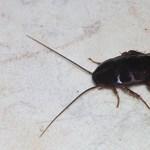Csótányt nevezhet el exéről egy angol állatkertben