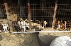 A megkínzott állatokért tüntettek országszerte
