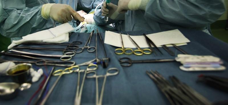 Rekordszámú szervátültetést végeztek tavaly a Semmelweis Egyetem klinikáin