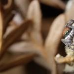 750 ezer faj élhet Ausztráliában, de 500 ezerről alig tudunk valamit