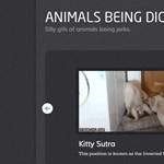 Mikroblog-ajánló: közröhejes állatok mozgásban