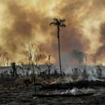 Tízéves csúcsot ért el az erdőtüzek száma Brazíliában