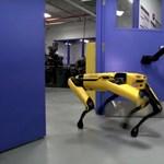 Videó: Lenyűgöző és kicsit talán félelmetes is, hogyan dolgozik össze a Boston Dynamics két robotkutyája
