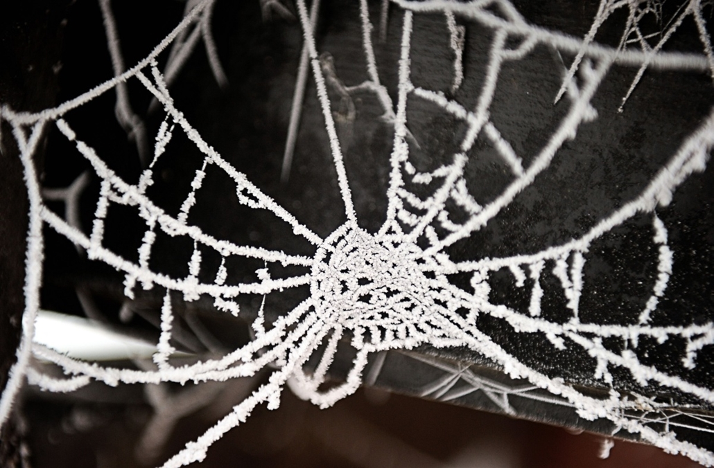 afp. pók, pókháló, nagyítás - Godewaersvelde, Franciaország, 2013.01.23. A view of a frozen spider web covered in ice on January 23, 2013, in Godewaersvelde. A wave of cold weather is expected in northern France this upcoming week