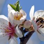 Az ünnepek után visszavonhatatlanul jön a tavasz