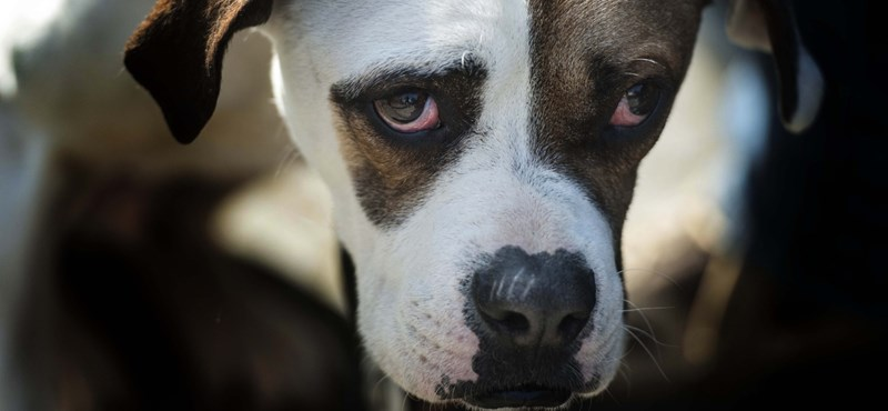 A BKK ellenőrei lecsaptak a bliccelő kutyákra, ennyiszer büntették tavaly a gazdákat
