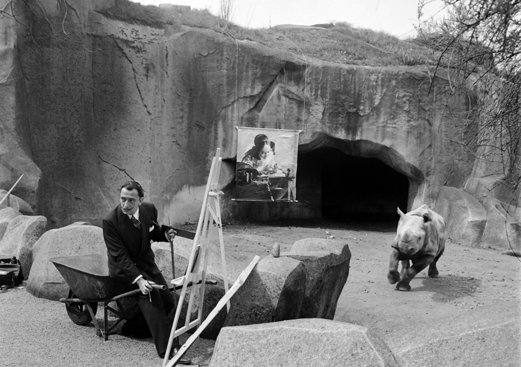afp. nagyítás - Salvador Dali 110 éve született - 1955.04.30. FRANCE, Paris : Spanish artist Salvador Dali, one of the most popular painters of the 20th century, paints a rhinoceros , on April 30, 1955 in the Vincennes zoo, in front of the Verrmeer art of