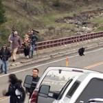 Videó: Feketemedve-család kergetett meg egy csapat turistát