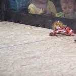 Robotok harcáról készült videókat távolított el a YouTube, mert állatkínzásnak vette azokat