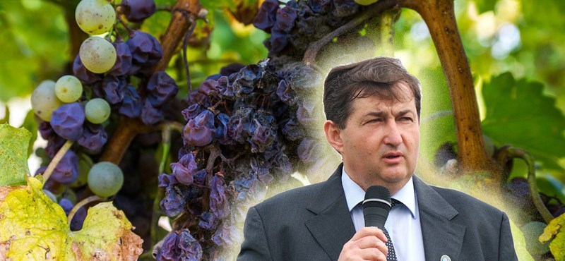 Mészáros Lőrinc Tokajban: a bor mellé kísérőnek ötcsillagos kúria