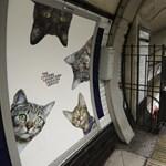 Cicák mindenhol: macskaparadicsomot csináltak egy londoni metrómegállóból – fotók