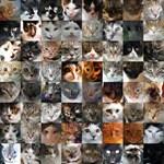 A mesterséges intelligenciától cuki macskákat kértek, erre ezt dobta a gép – fotó