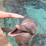 """Úgy """"beszélnek"""" a delfinek, mint az emberek?"""