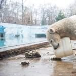 Jegesmedve tört-zúzott egy szállodában a Spitzbergákon