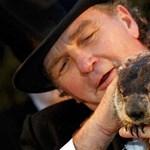 Meghalt a híres mormota, dugába dőlt a tavaszjóslás