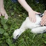 Hogyan lesz a testápolóból gólyafészek-emelő?