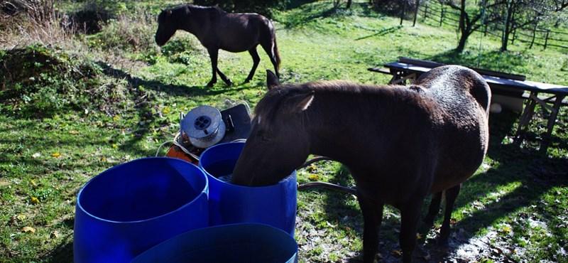 Szőrén ülik meg a lovat, a norvégoknak mégis tetszik