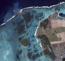 Nyakig olajosan próbálják megmenteni Mauritius földi paradicsomát - Nagyítás fotógaléria