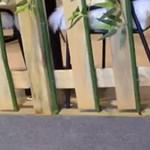 Pandává festett kutyákkal robbantott egy kínai kávézó – videó