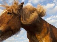 Eldurvult házibulihoz hívták ki a rendőrséget, akik találtak egy lovat a negyediken