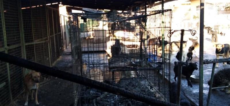 Tűz volt egy veszprémi állatmenhelyen az éjjel