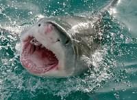 Cápa végezhetett egy tizenéves szörfössel Ausztráliában