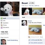 Nagyüzemben függesztik fel a Google+ profilokat
