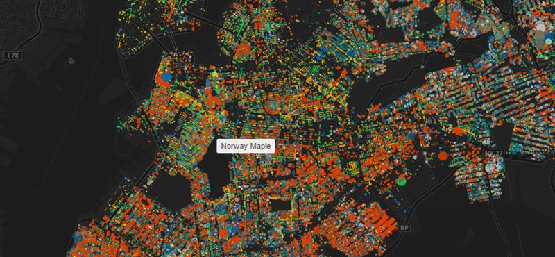 Nézze meg New York fáit ezen az interaktív térképen
