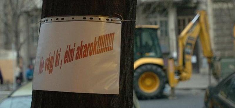 Újra veszélybe kerülhetnek a fák a Nagymező utcában