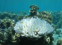 Sosem látott léptékben pusztul az ausztrál Nagy-korallzátony