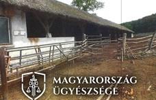 158 szarvasmarhát éheztetett halálra egy ember Komáromban