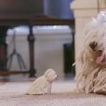 Zuckerberg szobrot épített egy magyar kutyának