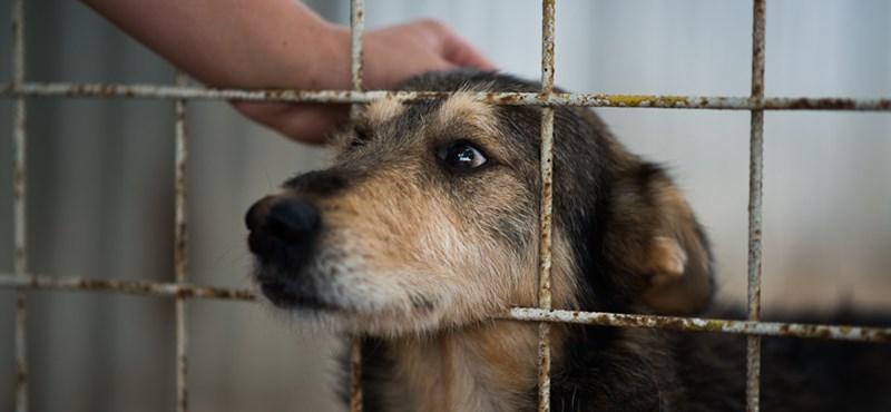 Szabadon kószálhatott Pécsen a nőkre támadó, kutyákat kínzó férfi