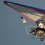 Fotók: Putyin álcsőrrel tanítja repülni a darvakat