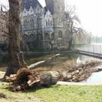 Kidőlt egy életveszélyes fa a Városligetben