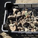 Elképesztő régészeti feltárás: több tízezer lelet került elő Szolnokon