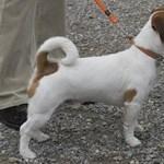 Kidobtak egy kutyát az ötödikről – nem történt bűncselekmény a rendőrség szerint