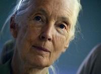 Jane Goodall is fellép a Sziget Nagyszínpadán