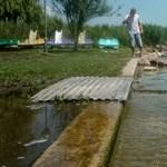 Lehet a Balaton vizén vaddisznóra vadászni? A kormányhivatal szerint igen