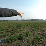 Hol nőtt a magyar termőföld ára? Értéktérkép és lista!